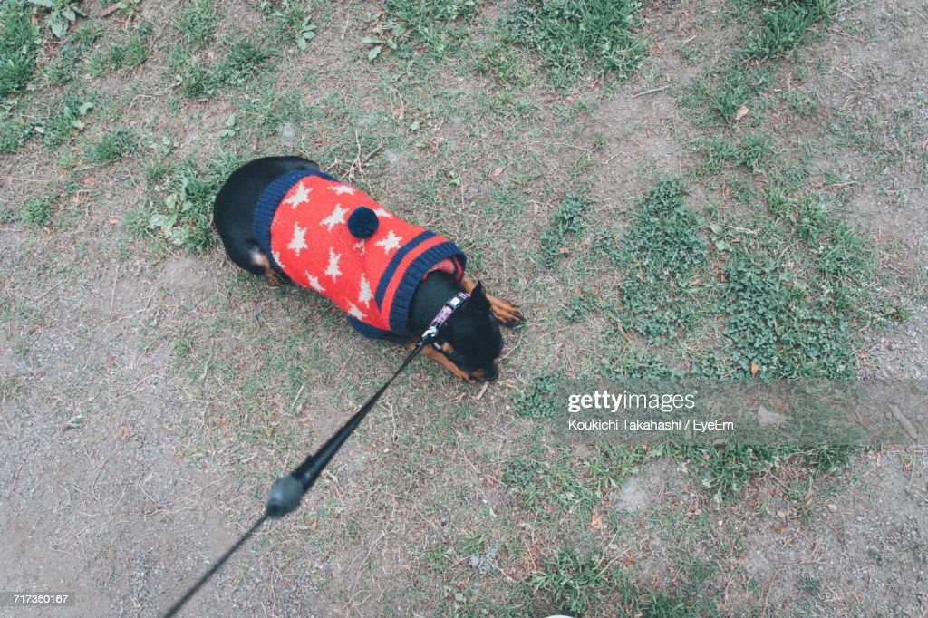 High Angle View Of Dog Outdoors : Stock Photo
