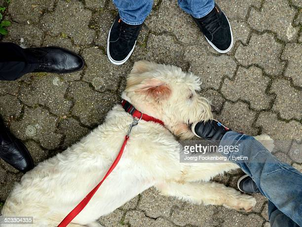 high angle view of dog - men with hairy legs stock photos and pictures