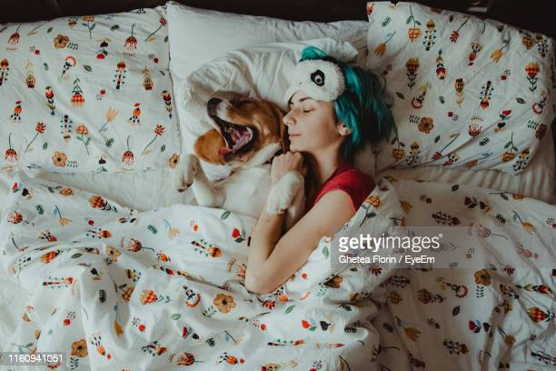 high angle view of dog relaxing on bed at home - slapen stockfoto's en -beelden
