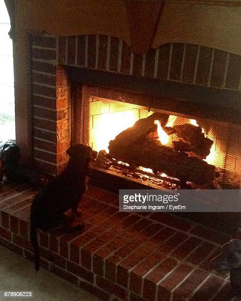 High Angle View Of Dog Sitting By Fireplace At Home