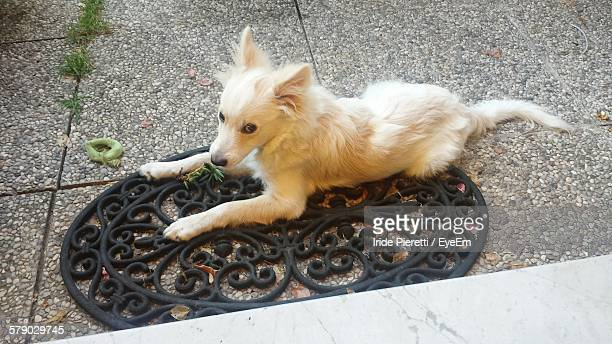 high angle view of dog sitting on doormat - massa stock pictures, royalty-free photos & images