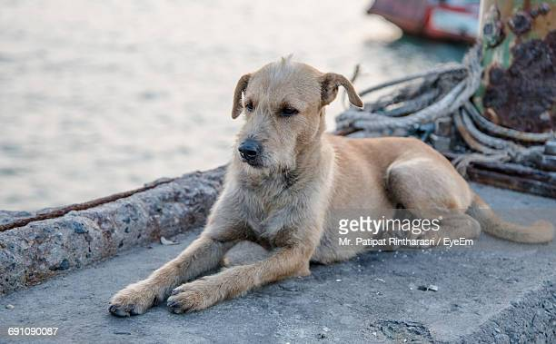 high angle view of dog sitting on retaining wall - stray animal stock pictures, royalty-free photos & images