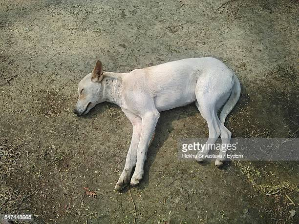 high angle view of dog sleeping on street - rekha stock pictures, royalty-free photos & images