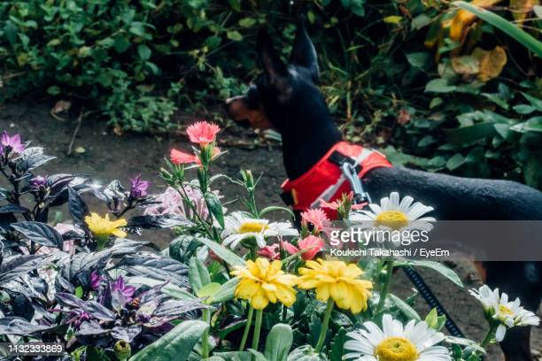 High Angle View Of Dog Standing By Flowers At Park