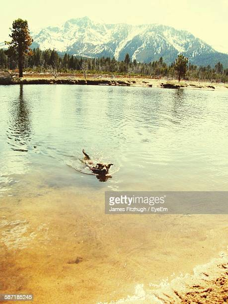 High Angle View Of Dog Swimming In Lake Tahoe