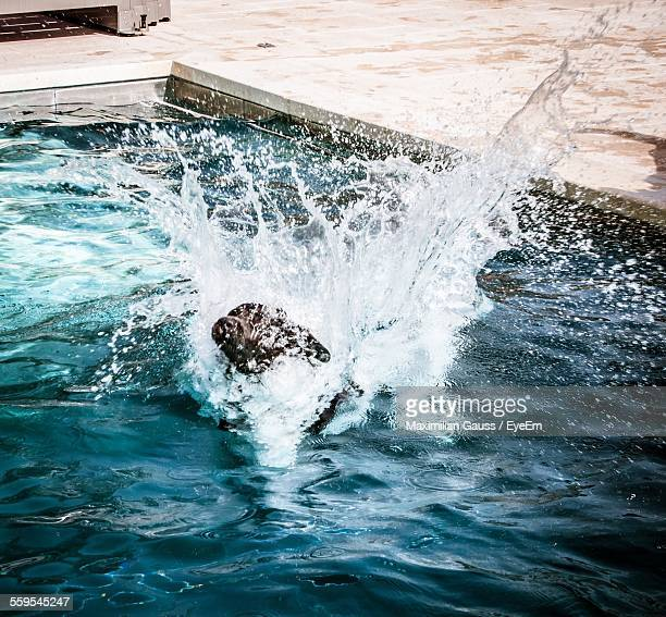 High Angle View Of Dog Swimming In Pool