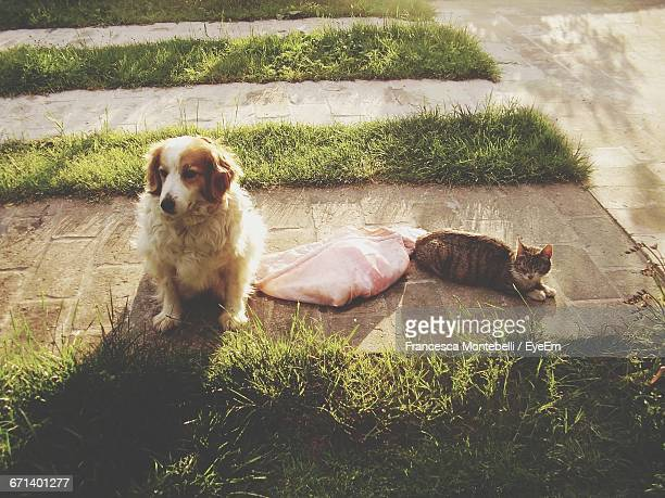High Angle View Of Dog With Cat In Garden
