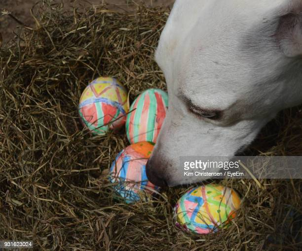 high angle view of dog with easter eggs on grass - dog easter stock pictures, royalty-free photos & images