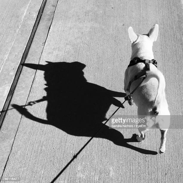 High Angle View Of Dog With Pet Leash Walking On Footpath During Sunny Day