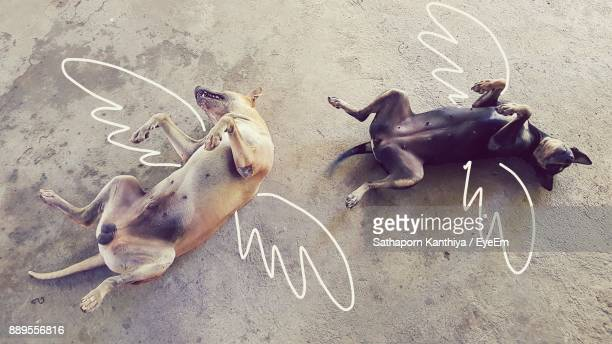 High Angle View Of Dogs Lying On Artificial Wings Drawn On Field
