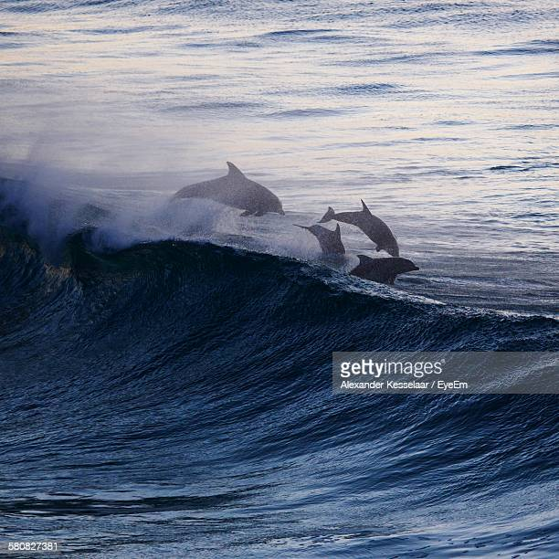 High Angle View Of Dolphins Swimming On Sea Wave