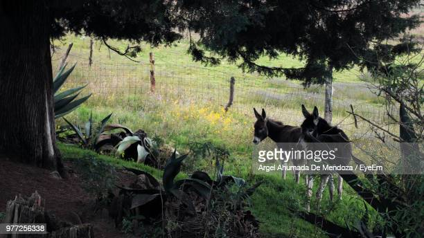 High Angle View Of Donkeys Standing On Grassy Field In Forest