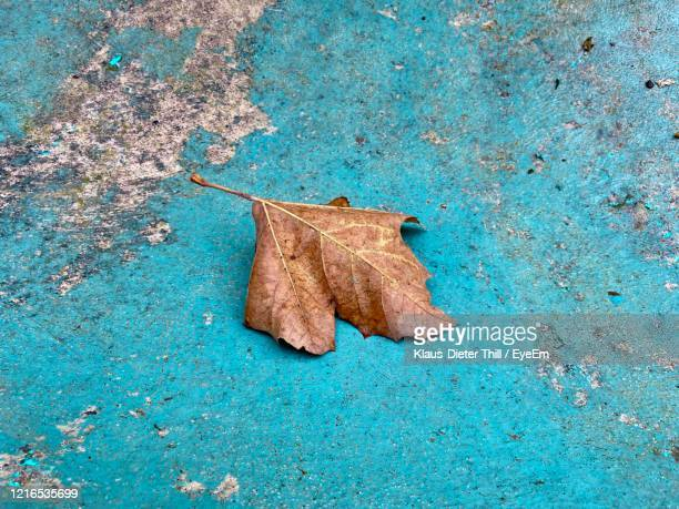 high angle view of dried leaf on dry leaves - klaus-dieter thill stock-fotos und bilder