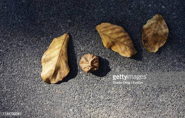 High Angle View Of Dried Leaves On Street