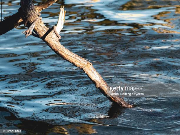 high angle view of driftwood in water - colbing stock pictures, royalty-free photos & images