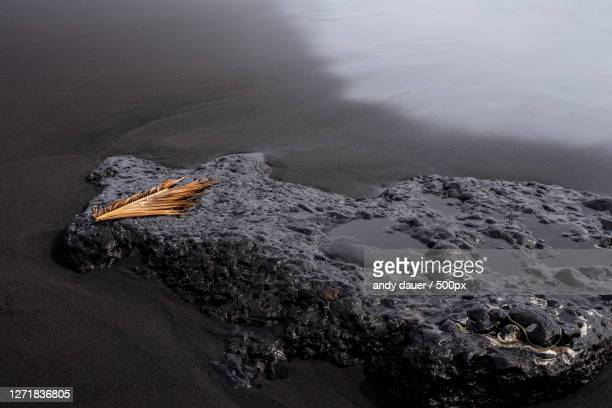 high angle view of driftwood on beach - andy dauer stock pictures, royalty-free photos & images