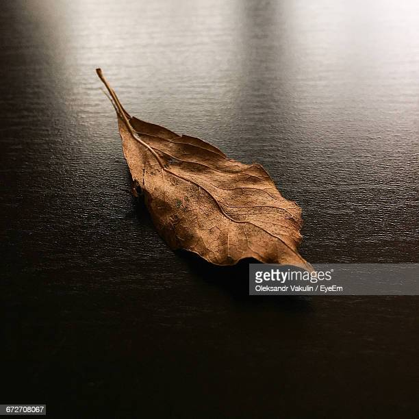 high angle view of dry leaf on table during winter - oleksandr vakulin stock pictures, royalty-free photos & images