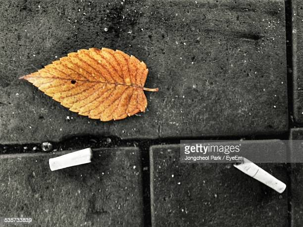 High Angle View Of Dry Leaf With Filter Cigarette On Street