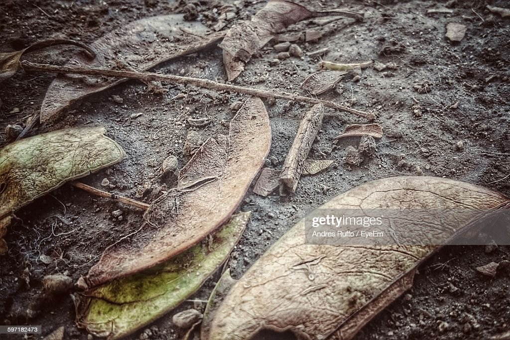 High Angle View Of Dry Leaves And Dirt : Stock Photo