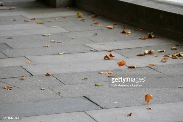 high angle view of dry leaves on sidewalk in city - leaf stock pictures, royalty-free photos & images