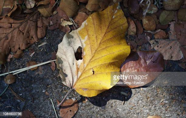 High Angle View Of Dry Maple Leaf On Land