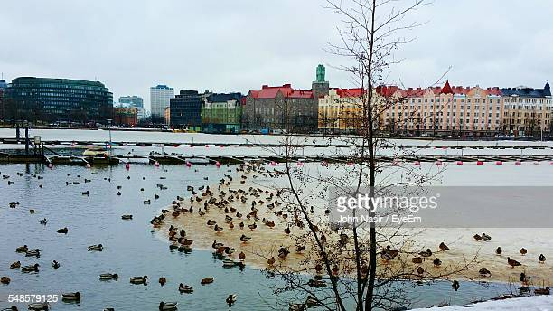High Angle View Of Ducks On Frozen Lake In City