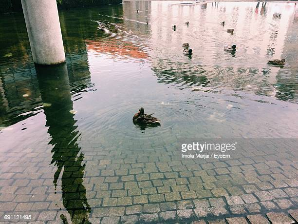 High Angle View Of Ducks Swimming On Lake By Column At City