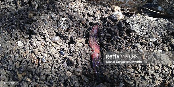 high angle view of earthworm in dirt - earthworm stock pictures, royalty-free photos & images