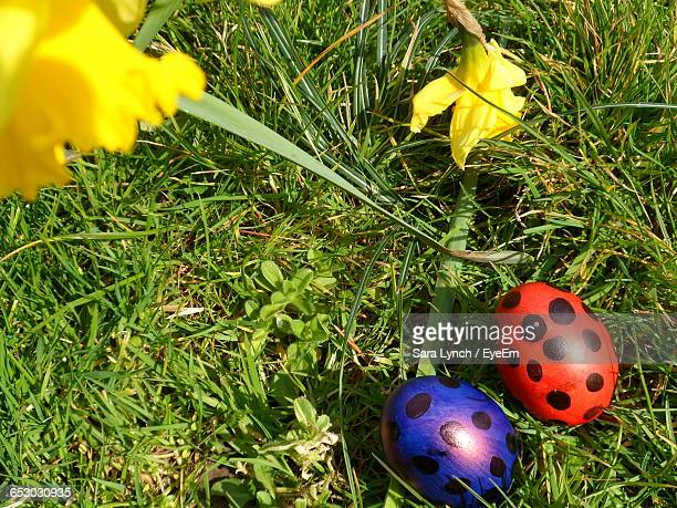 High Angle View Of Easter Eggs On Grass