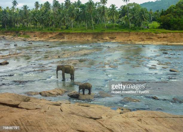 high angle view of elephant with calf standing in river - kandy kandy district sri lanka stock photos and pictures