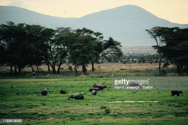 high angle view of elephants on field - nairobi stock pictures, royalty-free photos & images