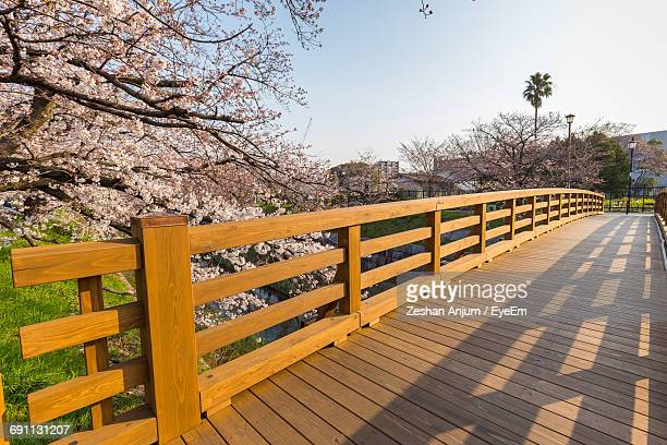 High Angle View Of Empty Footbridge Along Cherry Trees