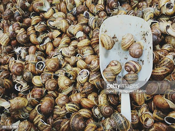 High Angle View Of Escargots At Market For Sale