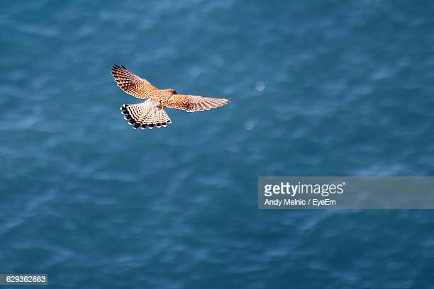 high angle view of falcon flying over sea - falcon bird stock photos and pictures