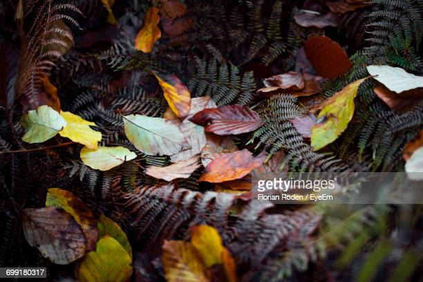 High Angle View Of Fallen Autumn Leaves And Ferns On Field