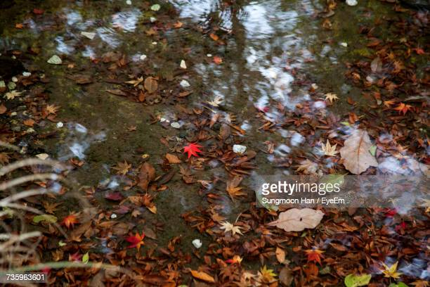 high angle view of fallen autumn leaves in puddle - jeonju stock pictures, royalty-free photos & images