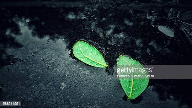High Angle View Of Fallen Green Leaves Floating On Puddle