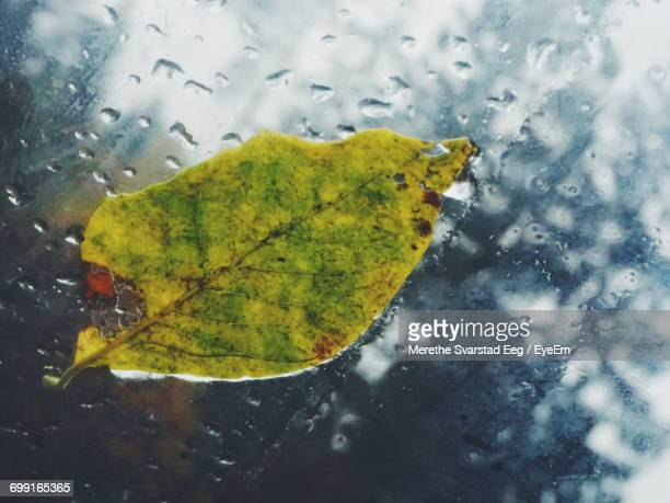 High Angle View Of Fallen Leaf On Wet Car Window During Monsoon