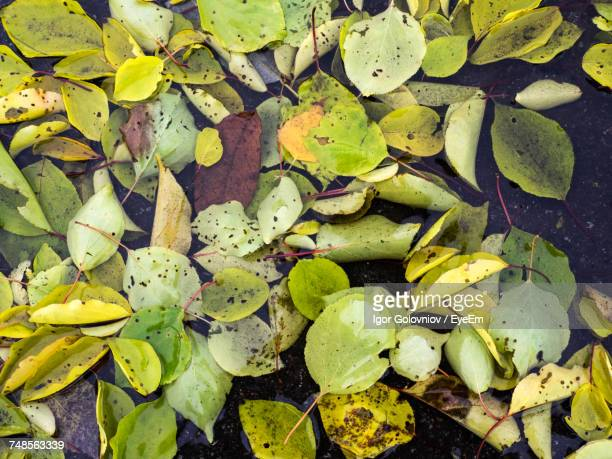 high angle view of fallen leaves in puddle on walkway during autumn - igor golovniov stock pictures, royalty-free photos & images