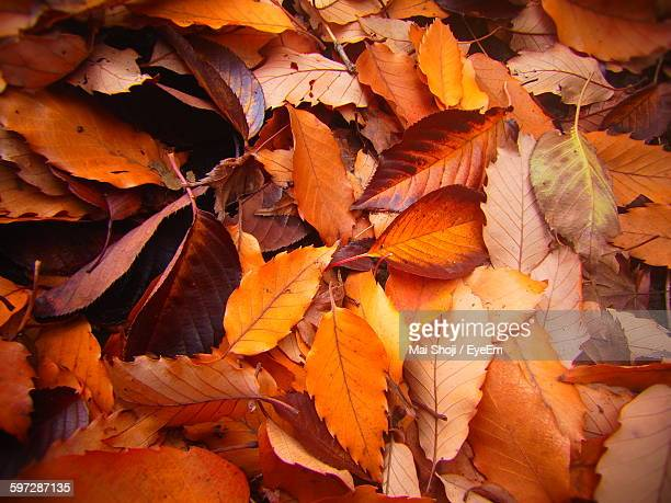 high angle view of fallen leaves on field during autumn - autumn falls stock pictures, royalty-free photos & images