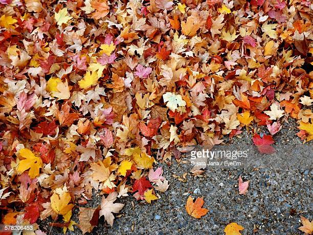 High Angle View Of Fallen Maple Leaves On Street