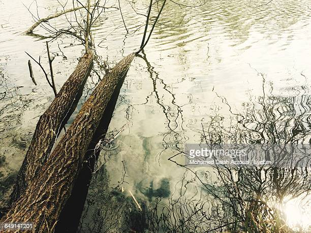 high angle view of fallen tree in lake - salah stock photos and pictures
