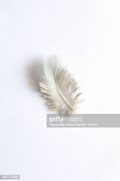 high angle view of feather against white background - piuma foto e immagini stock