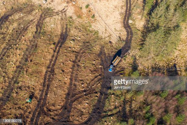 high angle view of felled timber being collected - johnfscott stock pictures, royalty-free photos & images