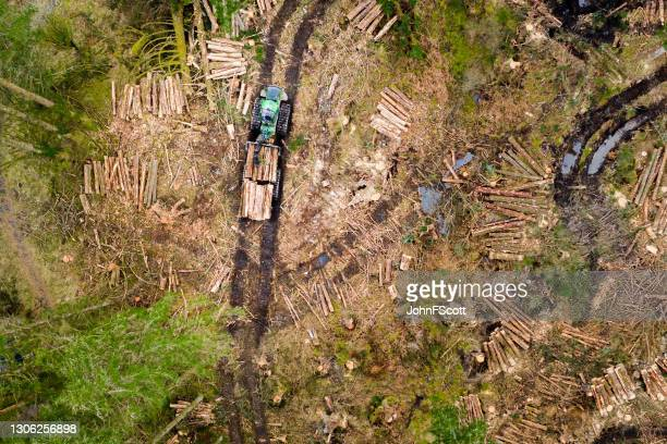 high angle view of felled trees being collected - johnfscott stock pictures, royalty-free photos & images