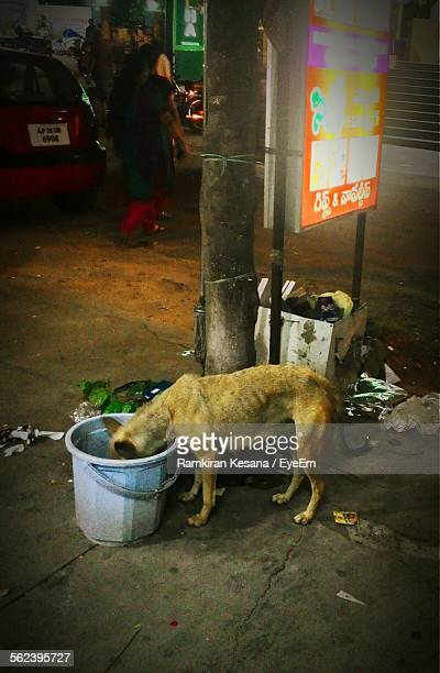 High Angle View Of Female Dog Eating On Street