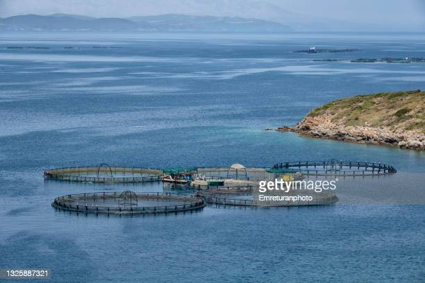 high angle view of fish cages of a fish arm in karaburun. - emreturanphoto stock pictures, royalty-free photos & images