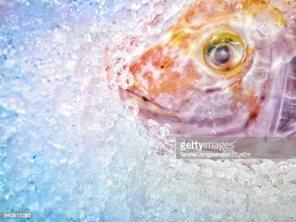 high angle view of fish in crushed ice - crushed ice stock pictures, royalty-free photos & images