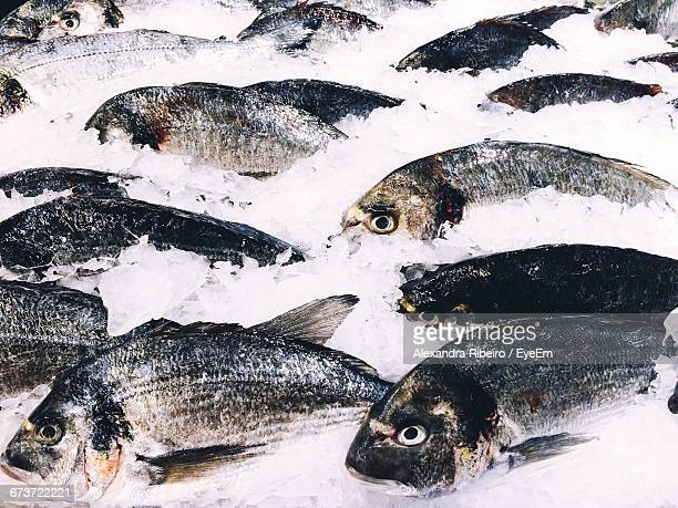 High Angle View Of Fish In Ice At Market