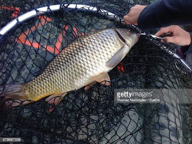 High Angle View Of Fish In Net